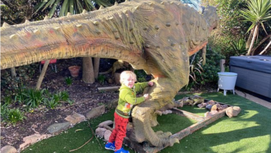 Photo of What happened after a 20-foot dinosaur came home?