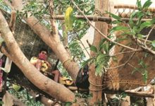 Photo of People in India made quarantine on trees | Pakistan News