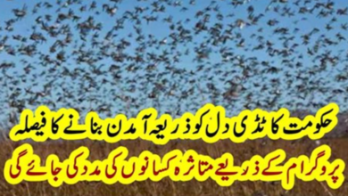 Photo of The Government's decision to make locusts a source of income | Report